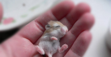 """[CHÙM ẢNH] Yêu đến """"rụng rời"""" trước hình ảnh các thú cưng sơ sinh siêu dễ thương"""