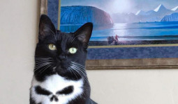 """[Ảnh] Chú mèo có vết bớt hình đầu lâu bị """"làm thịt"""""""