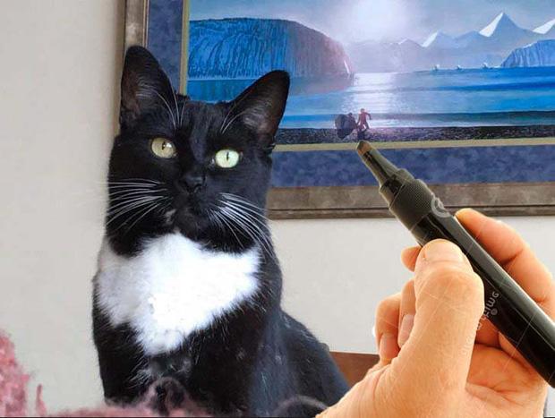chú mèo đầu lâu, ảnh chế