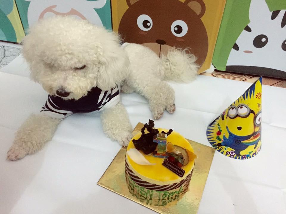 Chú chó pug số hưởng: Được chủ tổ chức sinh nhật 2 tuổi hoành tráng cùng anh em chiến hữu - Ảnh 7.