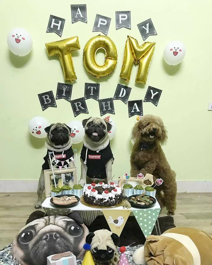 Chú chó pug số hưởng: Được chủ tổ chức sinh nhật 2 tuổi hoành tráng cùng anh em chiến hữu - Ảnh 3.