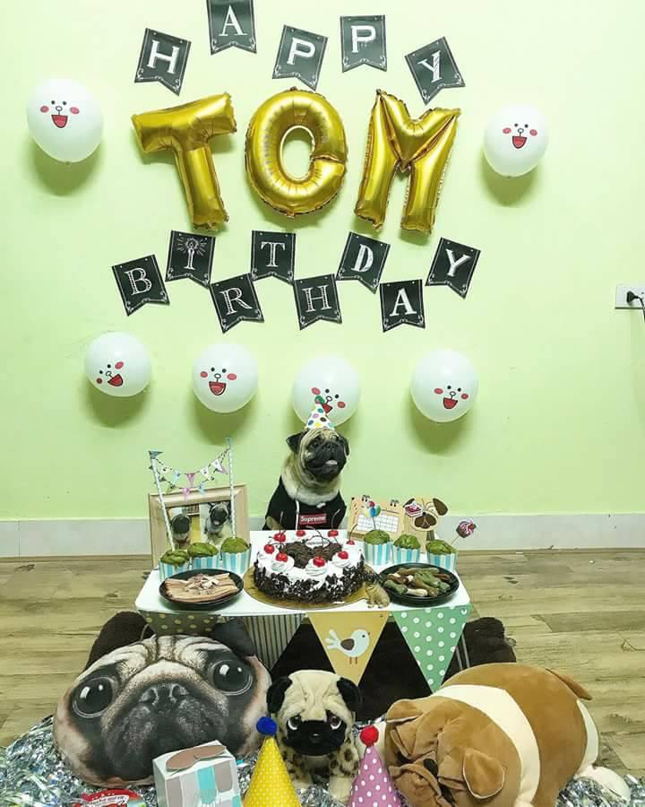 Chú chó pug số hưởng: Được chủ tổ chức sinh nhật 2 tuổi hoành tráng cùng anh em chiến hữu - Ảnh 2.