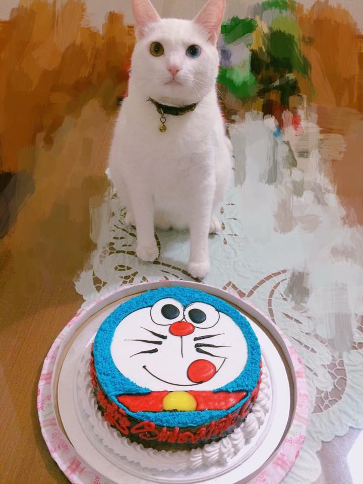 Chú chó pug số hưởng: Được chủ tổ chức sinh nhật 2 tuổi hoành tráng cùng anh em chiến hữu - Ảnh 5.