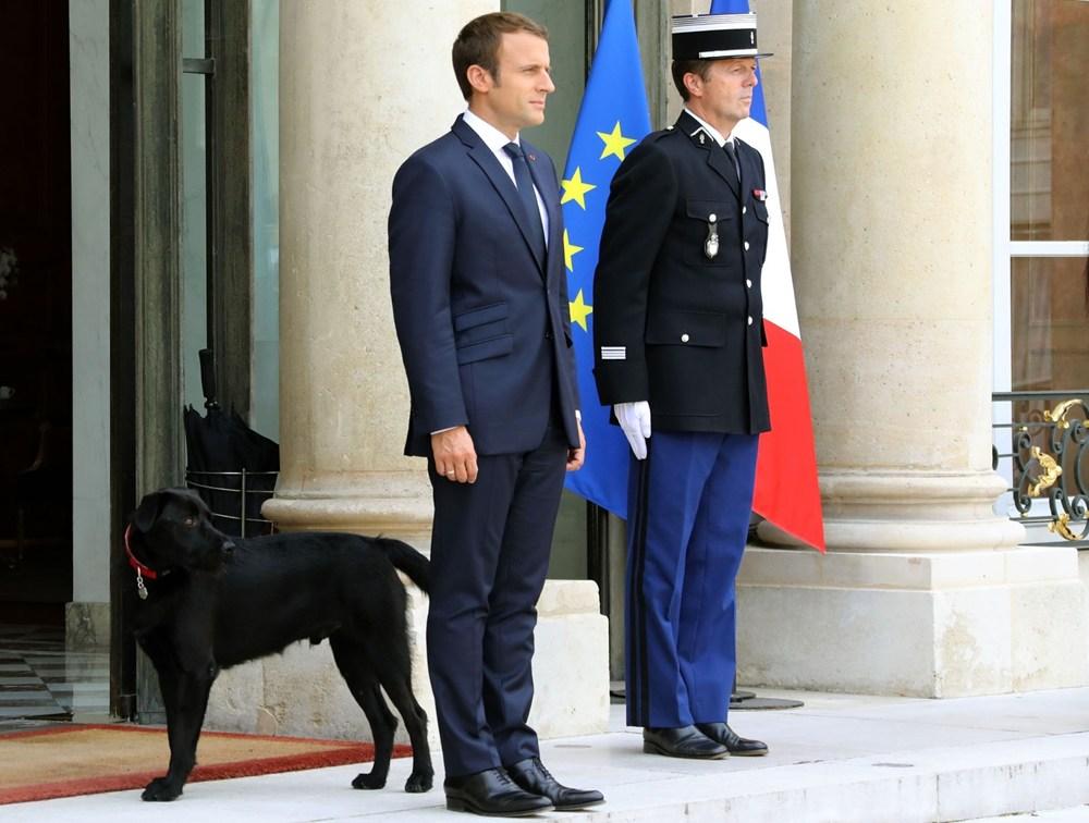 chó cưng, chó nemo,con chó của tổng thống, đái bậy, tiểu bậy, chó đái bậy, tin8