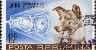 Câu chuyện về chú chó đầu tiên được đưa lên vũ trụ: Nỗi đau của Laika và sự thật phũ phàng phía sau