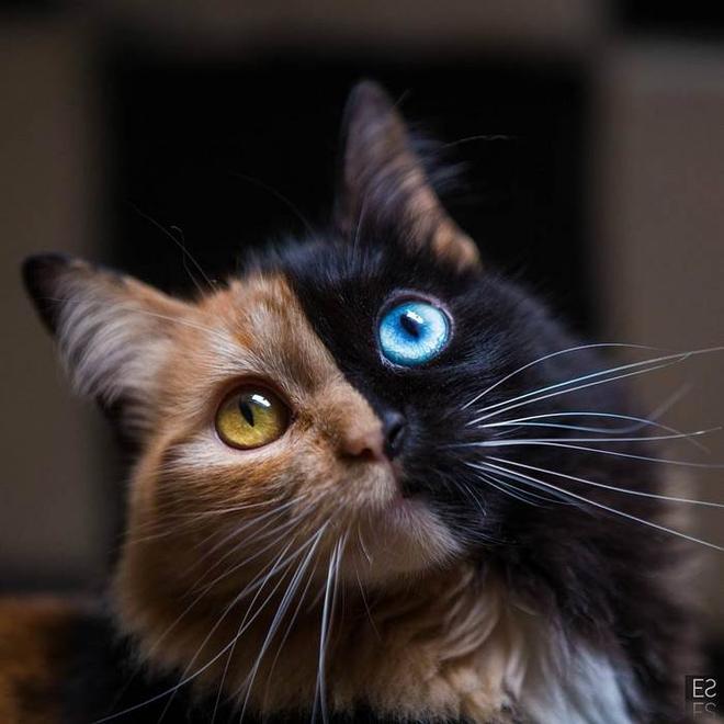 Trông như kết quả của một cuộc tình ngang trái, hóa ra cô mèo đặc biệt này gặp vấn đề về gen - Ảnh 1.