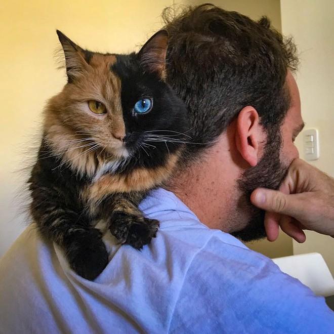Trông như kết quả của một cuộc tình ngang trái, hóa ra cô mèo đặc biệt này gặp vấn đề về gen - Ảnh 2.