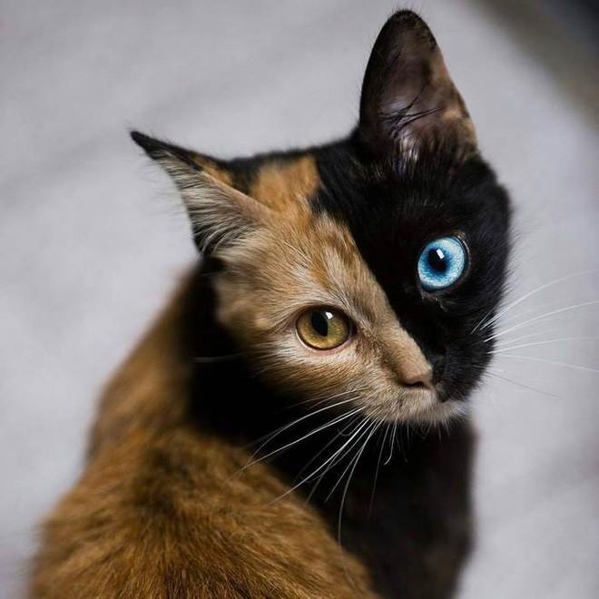 Trông như kết quả của một cuộc tình ngang trái, hóa ra cô mèo đặc biệt này gặp vấn đề về gen - Ảnh 4.