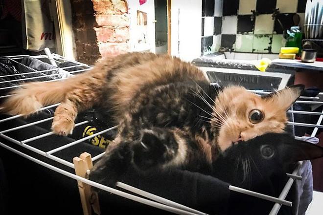 Trông như kết quả của một cuộc tình ngang trái, hóa ra cô mèo đặc biệt này gặp vấn đề về gen - Ảnh 5.