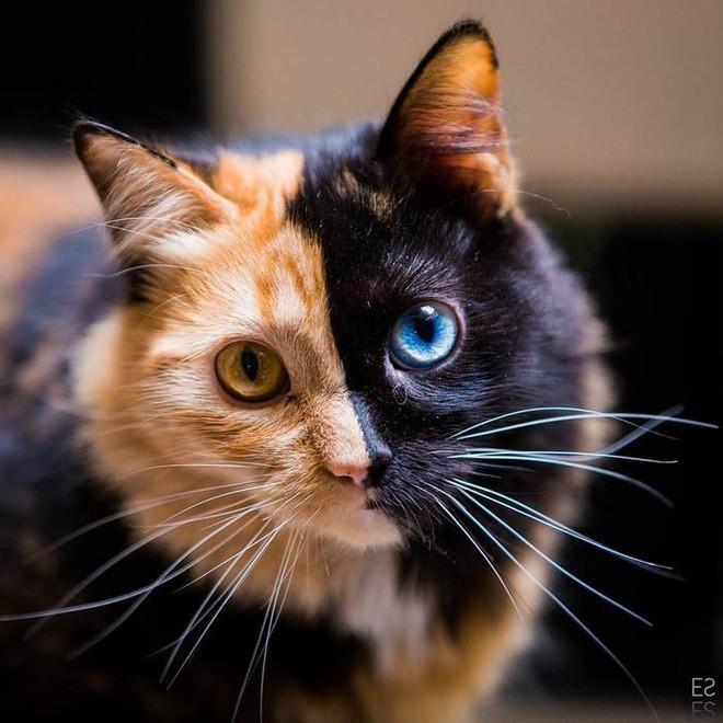 Trông như kết quả của một cuộc tình ngang trái, hóa ra cô mèo đặc biệt này gặp vấn đề về gen - Ảnh 10.