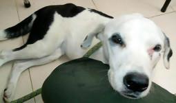 Bị chủ bỏ rơi ở sân bay, chó đau buồn nhịn đói đến chết