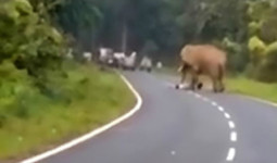 Đến quá gần voi để chụp ảnh, người đàn ông bị giẫm chết