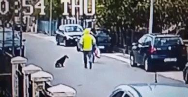 Tưởng ngon ăn giật được túi của người phụ nữ, tên cướp bị chú chó anh hùng tấn công chạy tóe khói