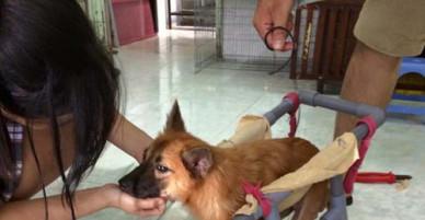 9x Sài Gòn giải cứu chó, mèo