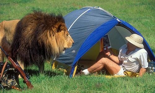 Sư tử cũng phải công bằng