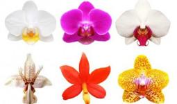 Trắc nghiệm: Đóa phong lan tiết lộ những bí ẩn nội tâm trong bạn