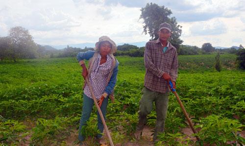 """""""Tín dụng đen"""" bóc lột nông dân nghèo (Kỳ 2): Làm thuê trên đất của mình"""