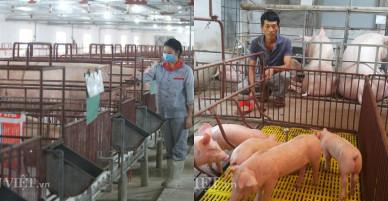 Giá lợn hơi hôm nay 10.12: Giá đang tăng nhẹ, cả nước ngóng vụ tết