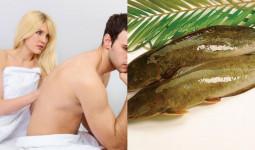 Chữa yếu sinh lý cho ông xã bằng 3 món ăn từ cá