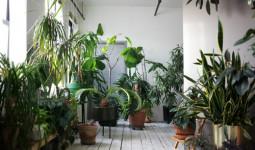 Căn hộ cũ được nâng giá khi bày trí những chậu cây nhỏ xinh