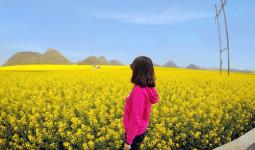 Biển hoa cải vàng ngút tầm mắt ở Trung Quốc