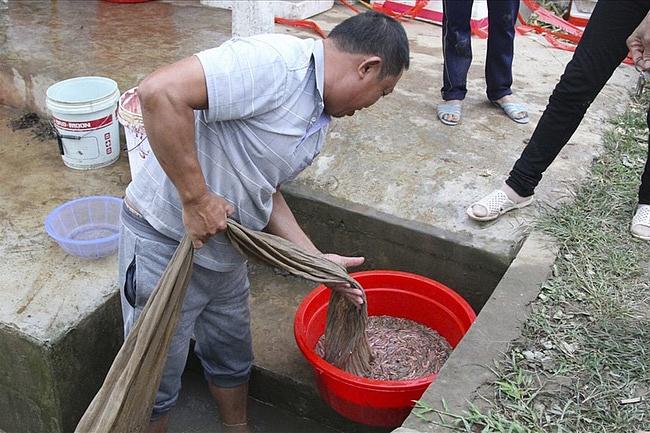 Nuôi con ngọ nguậy bán giá 600.000 đ/kg, dân Tứ Kỳ kiếm bộn tiền