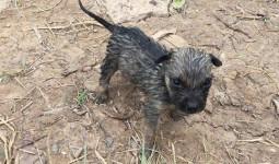 Chàng trai Việt cứu sống chú chó bị đuối nước được báo nước ngoài ca ngợi: Kẻ nghi ngờ anh dàn dựng, người ủng hộ anh hết mình