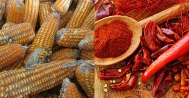 Ớt khô nhiễm độc tố aflatoxin gây nguy hiểm đến sức khỏe