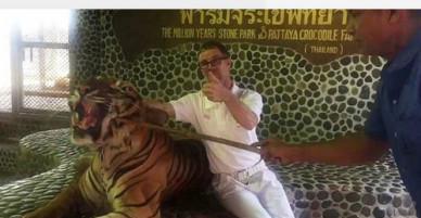 Nhân viên sở thú ở Thái Lan chọc miệng hổ mua vui cho khách