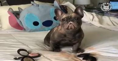 Những chú cún lầy lội, đáng yêu nhất năm 2017
