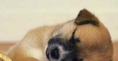 Tôi vừa mất đi em chó ở bên nhau 14 năm cuộc đời