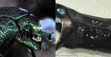 Bắt được cá mập như quái vật trong phim kinh dị