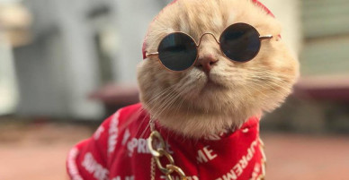 Chú mèo tên Chó chất nhất năm: Đeo kính thầy bói, mặc hoodie và mê chụp ảnh #OOTD