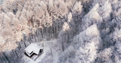 Mùa đông tuyết trắng như cổ tích ở Nhật Bản