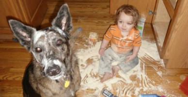 Cặp bài trùng bé và thú cưng đáng yêu hết cỡ
