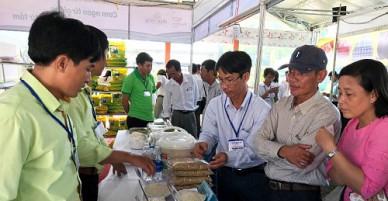 Chợ đầu năm sốt gạo ST24, thương lái đổ về miền Tây đặt hàng