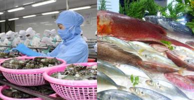 Kiến nghị Chính phủ hỗ trợ truyền thông hình ảnh cá tra tại châu Âu