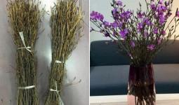 Sự thật về hoa đỗ quyên ngủ đông - cành củi khô bị tẩm hóa chất?