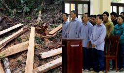 Xét xử 21 bị cáo trong vụ phá rừng pơmu ở khu vực biên giới