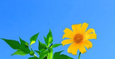 Dự báo thời tiết hôm nay (20.1): Cuối tuần, miền Bắc thời tiết đẹp, không mưa, trưa và chiều có nắng