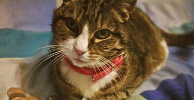 Chú mèo may mắn được thừa kế 30.000 Euro