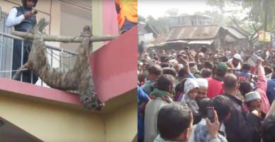 Bangladesh: Hổ dữ ăn thịt người bị dân làng đánh đập đến chết