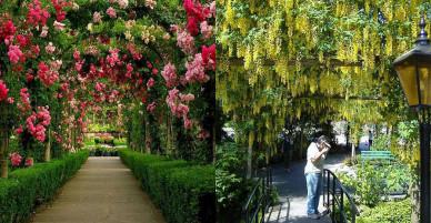"""Những vườn hoa đầy mê hoặc khiến các """"thánh sống ảo"""" thích mê"""