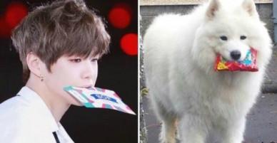 Lật tẩy thói quen khiến Kang Daniel có biệt danh cún con