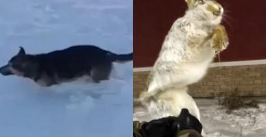 """Rét -56 độ C, động vật """"thi nhau"""" đóng băng ở Kazakhstan"""