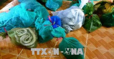 Bình Phước bắt giữ vụ vận chuyển động vật rừng với số lượng lớn