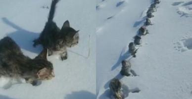 Trời lạnh âm độ, chuột đồng Trung Quốc đóng băng thành hàng dài thẳng tắp gây xôn xao mạng xã hội