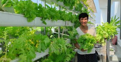 Gia đình Lý Hải - Minh Hà thu hoạch xà lách ăn trừ cơm