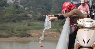 Người dân vô tư ném cá chép từ trên cầu cao hàng chục mét xuống sông để phóng sinh trong ngày ông Công ông Táo