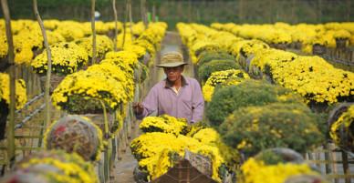 Ngôi làng hơn trăm năm trồng hoa không chạm đất ở Sa Đéc